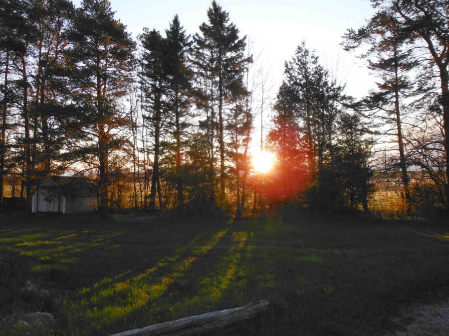 Sunset - Yardside
