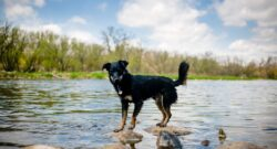 dog on rocks