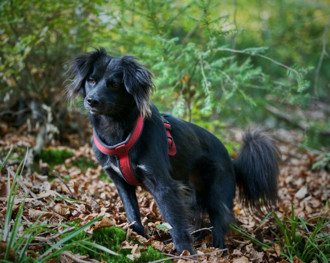 small black dog on a hike